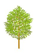 Forest,Clip Art,Tree,Branch...