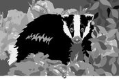 Badger,Color Image,Ilustrat...