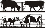 Cattle,Beef,Cow,Silhouette,...