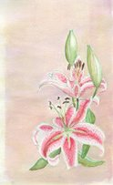 Japanese Lily,Lily,Watercol...