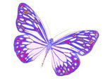 Butterfly - Insect,Nature,L...