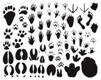 Footprint,Animal,Paw,Track,...
