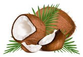 Coconut,Fruit,Slice,Vector,...