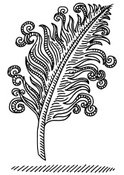 Feather,Design Element,Draw...