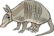 Armadillo,Drawing - Art Pro...