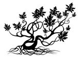 Root,Tree,Twisted,Silhouette,…