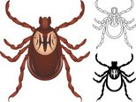 Tick,Silhouette,Animal,Outl...