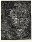 Woodcut,Forest,Animal,Anim...