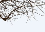 Dry,Branch,Tree,Twig,Outdoo...