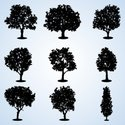 Silhouette,Tree,Forest,Outl...