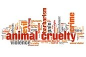 Pets,Social Issues,Animal T...