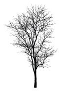 Tree,Outline,Silhouette,Vec...