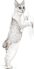 Domestic Cat,Sketch,Standin...