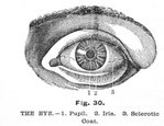 Eyeball,Human Eye,Eyesight,...