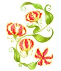 Watercolor Painting,red flo...