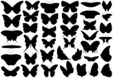 Butterfly - Insect,Flying,I...