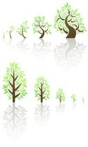 Tree,Growth,Cultivated,Plan...