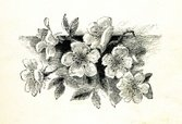 Etching,Flower,Single Flowe...