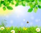Daisy,Background,Day,Plant,...