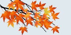 Autumn,Abstract,Leaf,Flower...