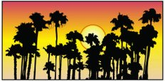 Palm Tree,Vector,Sunset,Nat...