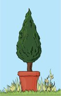 Topiary,Bush,Potted Plant,F...