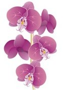Orchid,Flower,Tropical Clim...