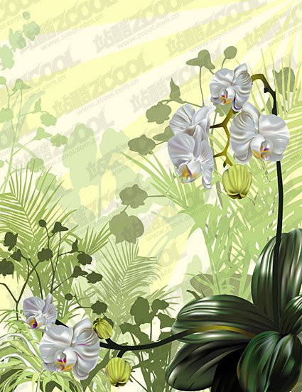Orchid Stock