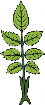 Free Mint Branch Clipart And Vector Graphics Clipart Me
