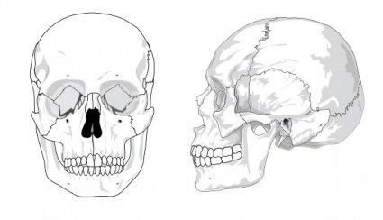 Human Skull No Text No Color