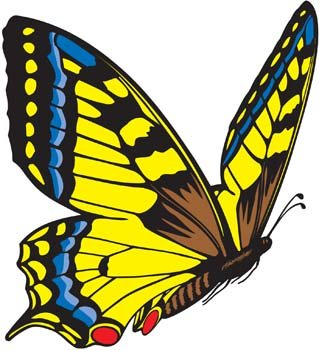 Schmetterling Vector 3