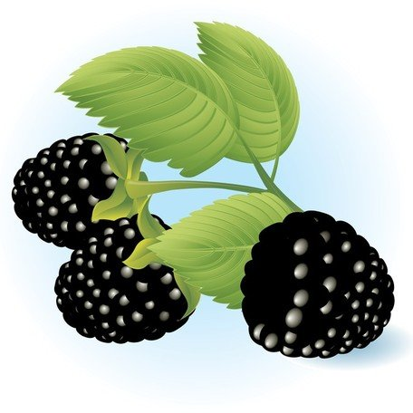 무료 Dewberries