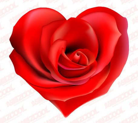 Red rose heart-shaped