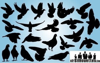 Pigeon Pack Symbol of Peace