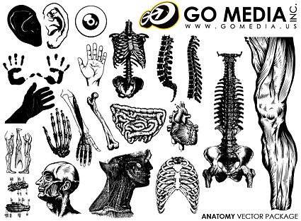 Go Media Vector Chupin material - the human body and organ