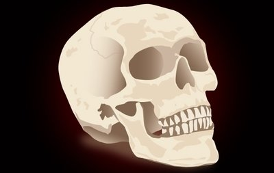 Realistic Skull for Halloween