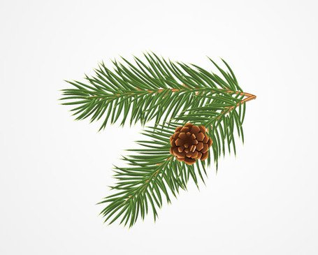 Report browse gt holiday amp seasonal gt pine or christmas tree branch