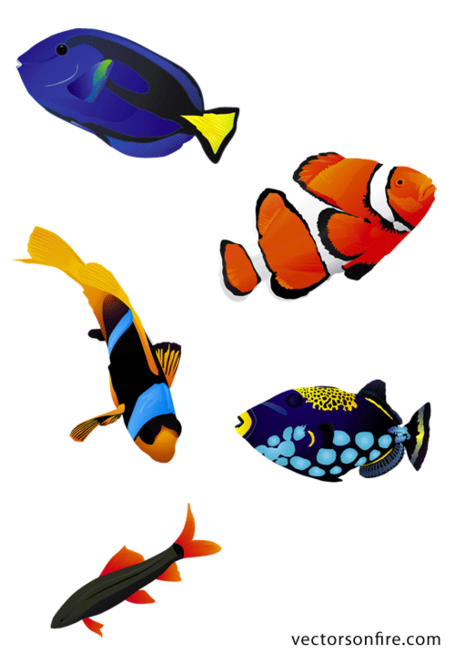 Aquarium coloré poissons (5 poissons)