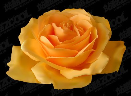 three yellow roses - clipart of yellow roses PNG image with transparent  background | TOPpng