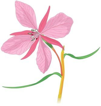 Orchid Flower 2