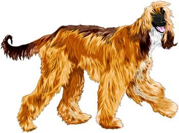 Beautiful Dog Vector 1