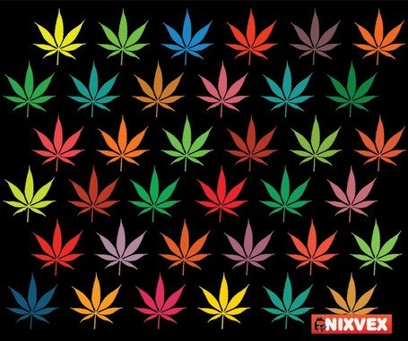 Nixvex Free Vector Of Colorful Leaves