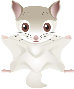 Flying Squirrel, Clip Art - Clipart.me