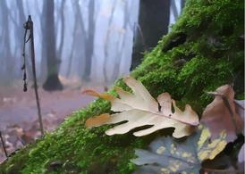 Autumn Forest Mosses
