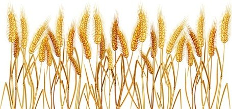 free yellow wheat 02 clipart and vector graphics clipart me rh clipart me what clip art can i use on my website wheat clip art free