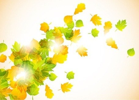 Autumn Fly Leaves