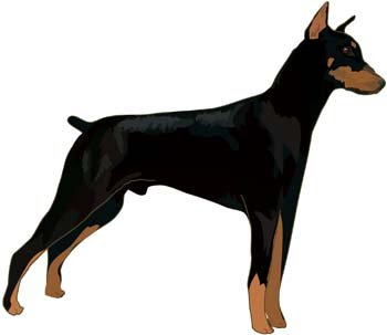 Vecteur Doberman 7
