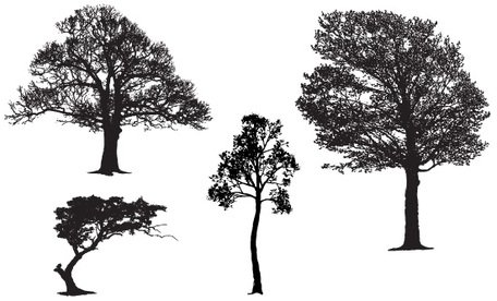 Free Realistic Tree Vector Silhouette Samples
