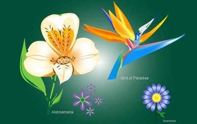 Flower Pack with Bird of Paradise
