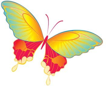 Butterfly Vector 19